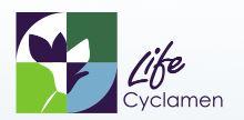 Life Cyclamen